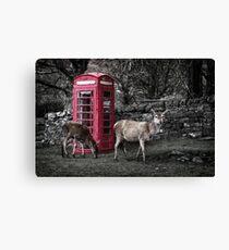 Deers @ Red Telephone Box (Kiosk 6) Canvas Print
