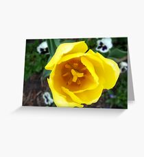 Yellow Two Lip and Pansies Greeting Card