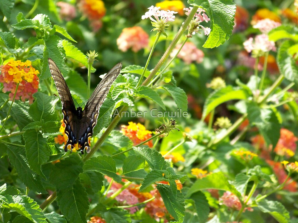 Butterfly Garden by Amber Carwile