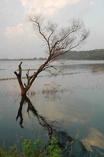 Reflection by Sachin Naik
