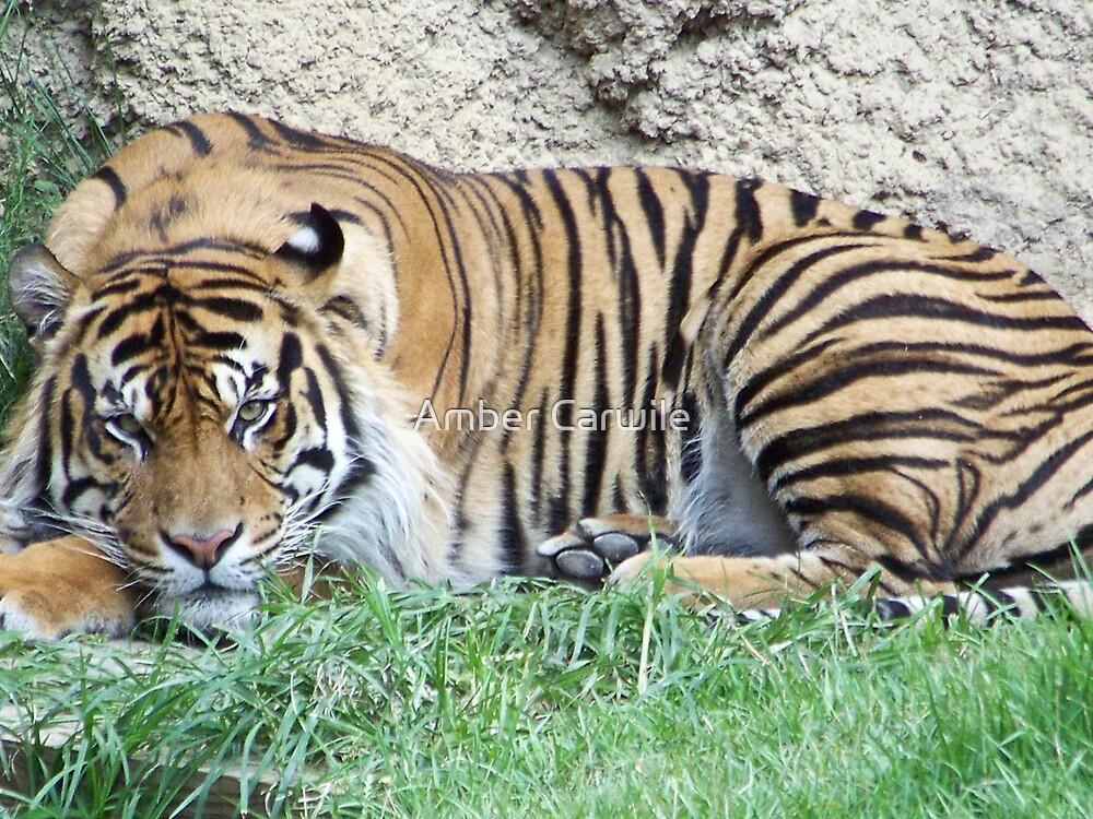 Tiger Eyes by Amber Carwile