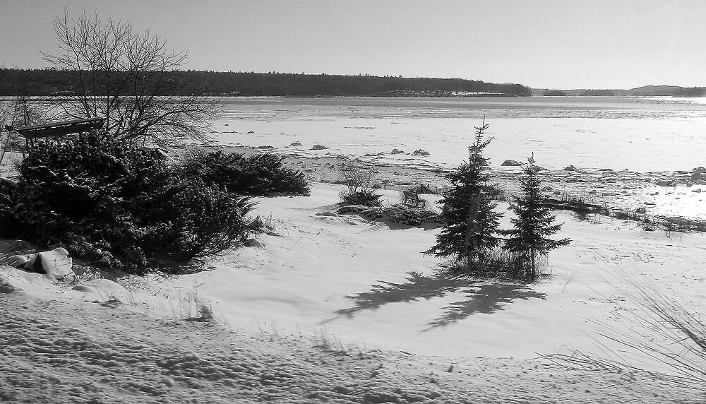 Christmas on a Maine beach by Patty Gross