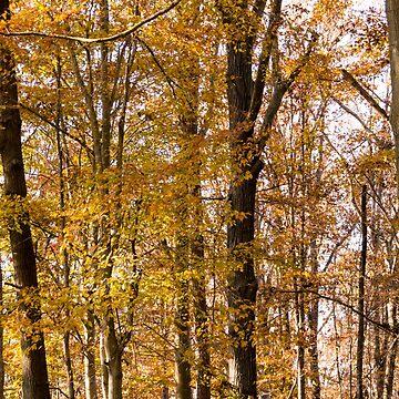 North Georgia Fall Colors 2 by andreaanderegg