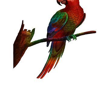 Cute Animals Bird Parrot by galleryOne