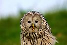 Portrait of an Ural Owl by Anne-Marie Bokslag