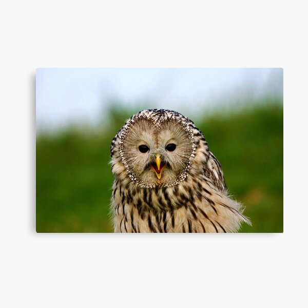 Portrait of an Ural Owl Canvas Print