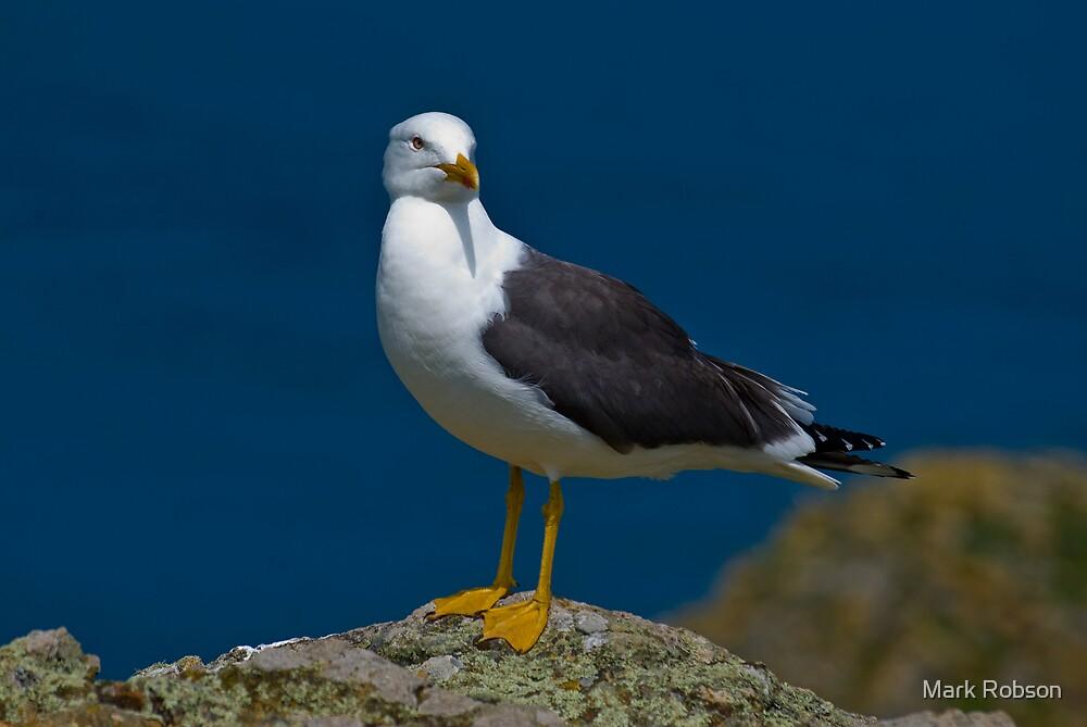 Great Blackbacked Gull by Mark Robson