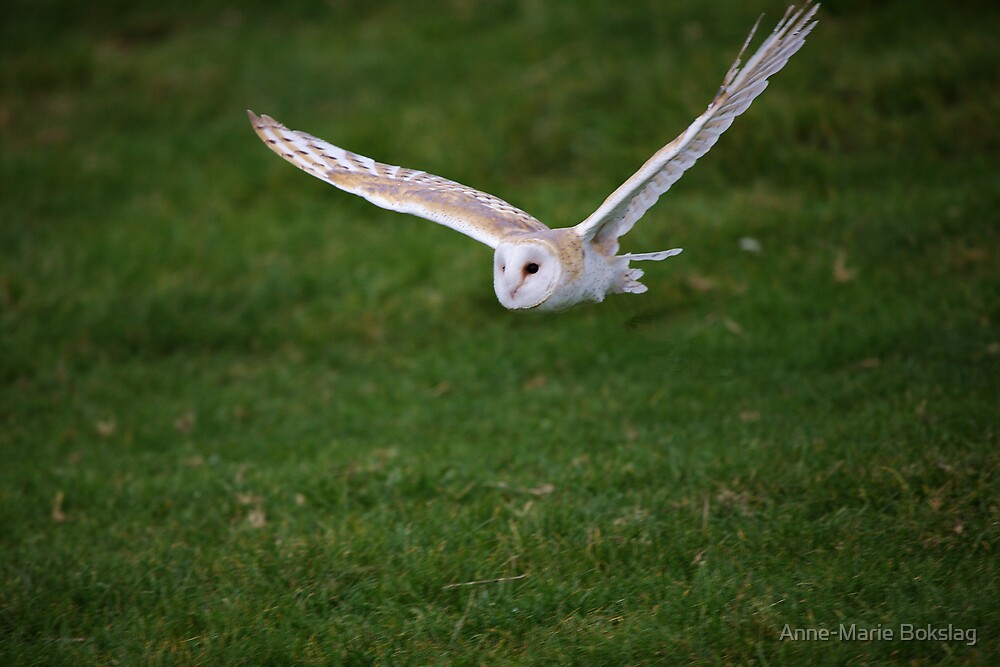 Barn Owl by Anne-Marie Bokslag
