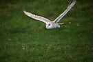 Barn Owl by Anne-Marie Bokslag