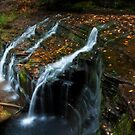 Autumn Splendor by Jeff Palm Photography