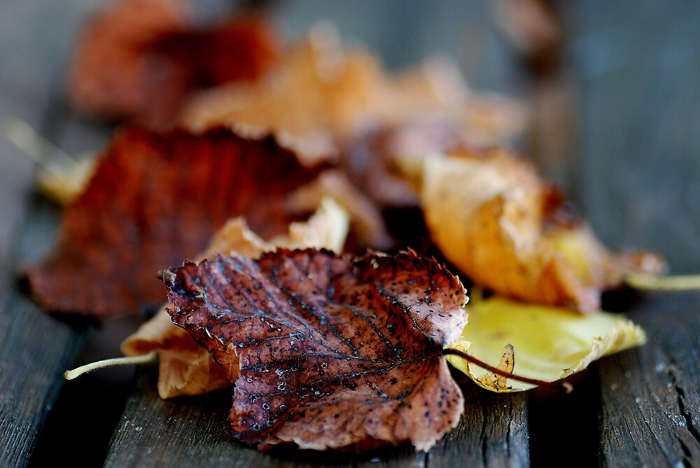 Bench leaves by loinfr