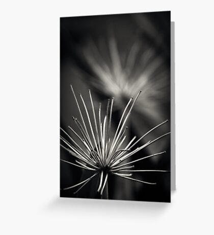 Untitled 1.0 Greeting Card