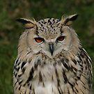 Portrait of a Siberian Eagle Owl by Anne-Marie Bokslag