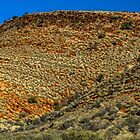 Spinifex Waves by Bette Devine