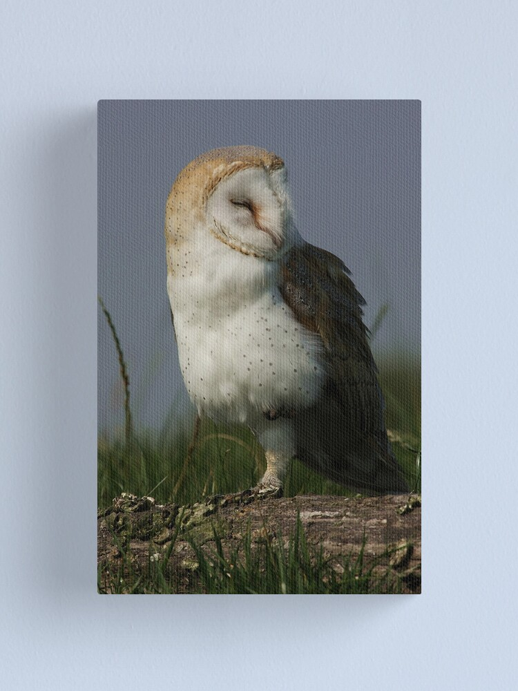 Alternate view of Portrait of a Barn Owl Canvas Print