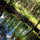 Nature´s Mirror - Summer  by Niina Niskanen