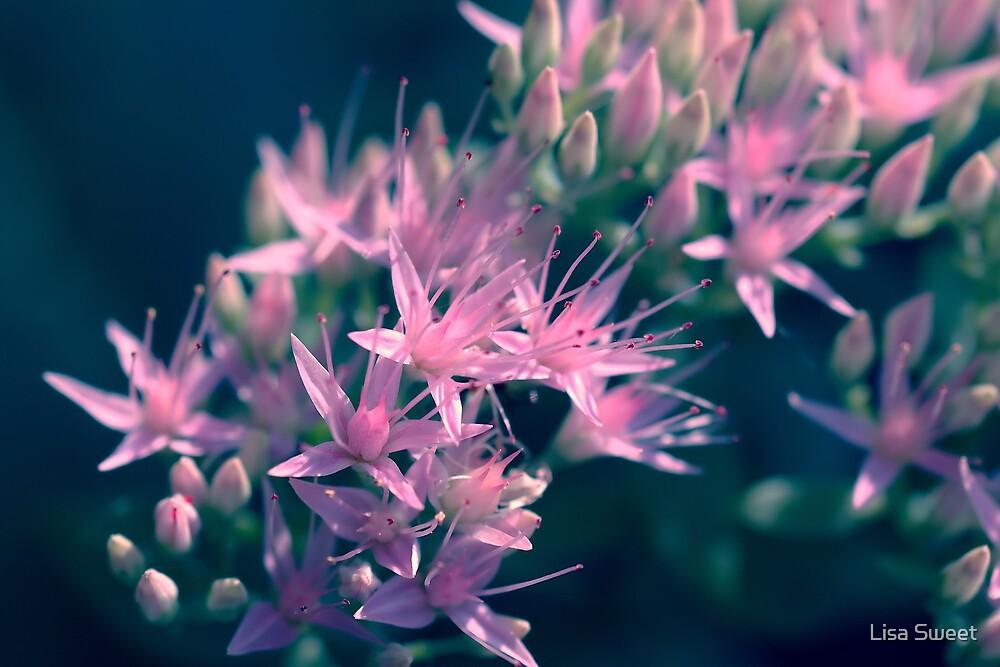 Pinks by Lisa Sweet