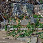 Rock And Seaweed Abstract  by Alexandra Lavizzari