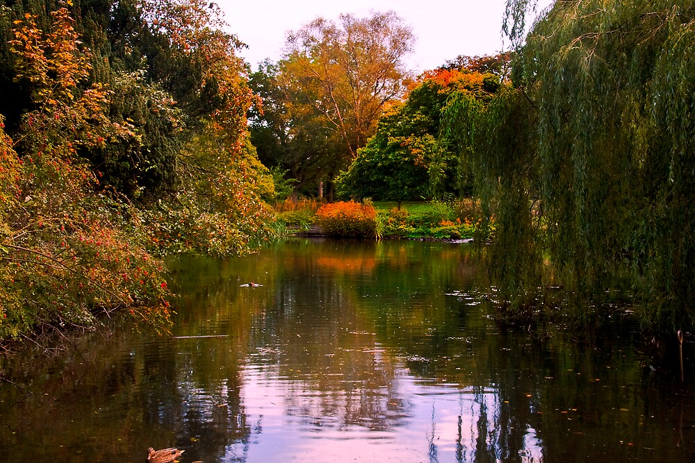 Autumn in the Royal Botanic Gardens by Chris Clark