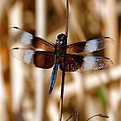 Dragonfly Takes a Rest by H A Waring Johnson