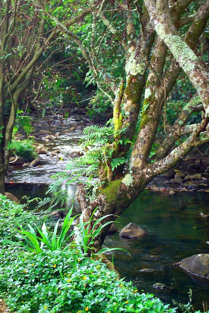 Kauai Creek by Dennis Begnoche Jr.