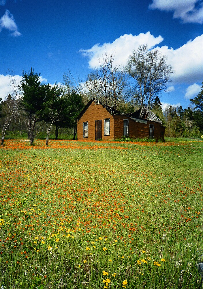 """  Wildflower Garden  "" by fortner"