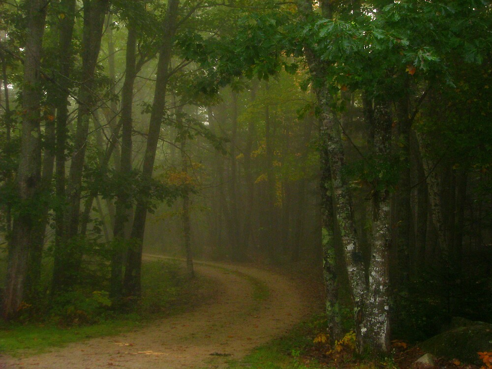 Fog creeping up my driveway by Patty Gross