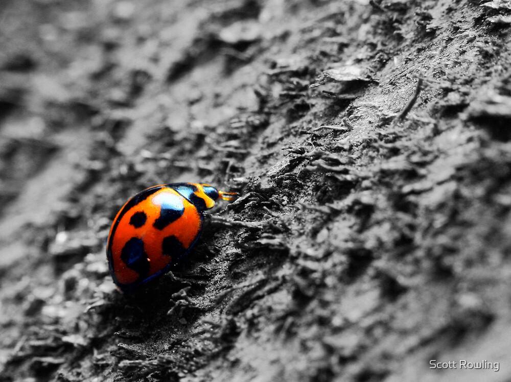 Lady Bug by Scott Rowling