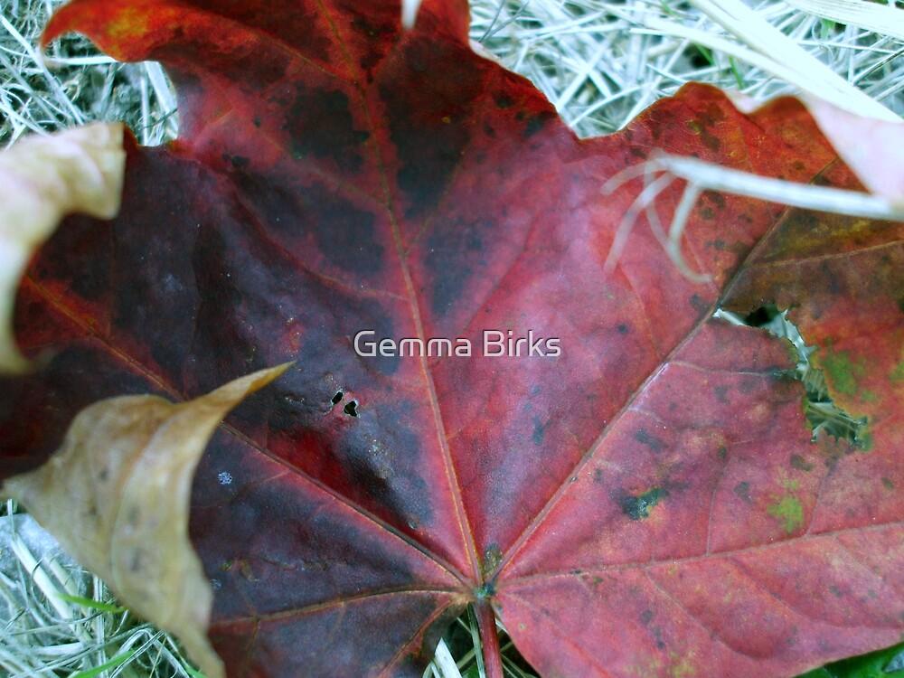 Autumn by Gemma Birks