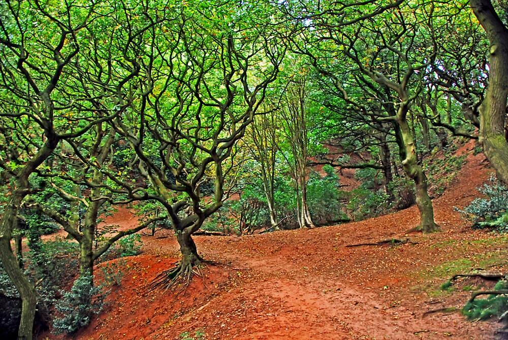 Sandstone Trail In Autumn by dallo