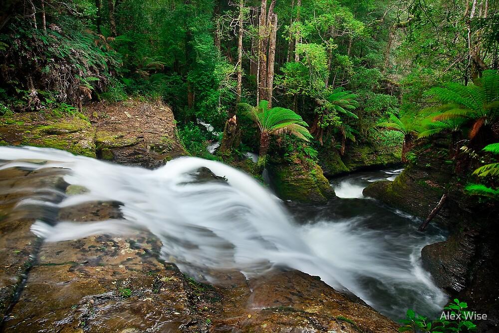 Liffey Falls 2 by Alex Wise
