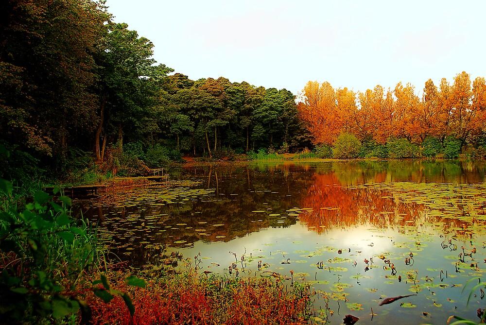 Local Lake In Autumn by dallo