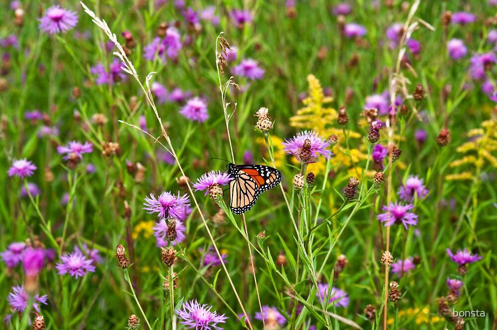 Monarch in flowers by bonsta