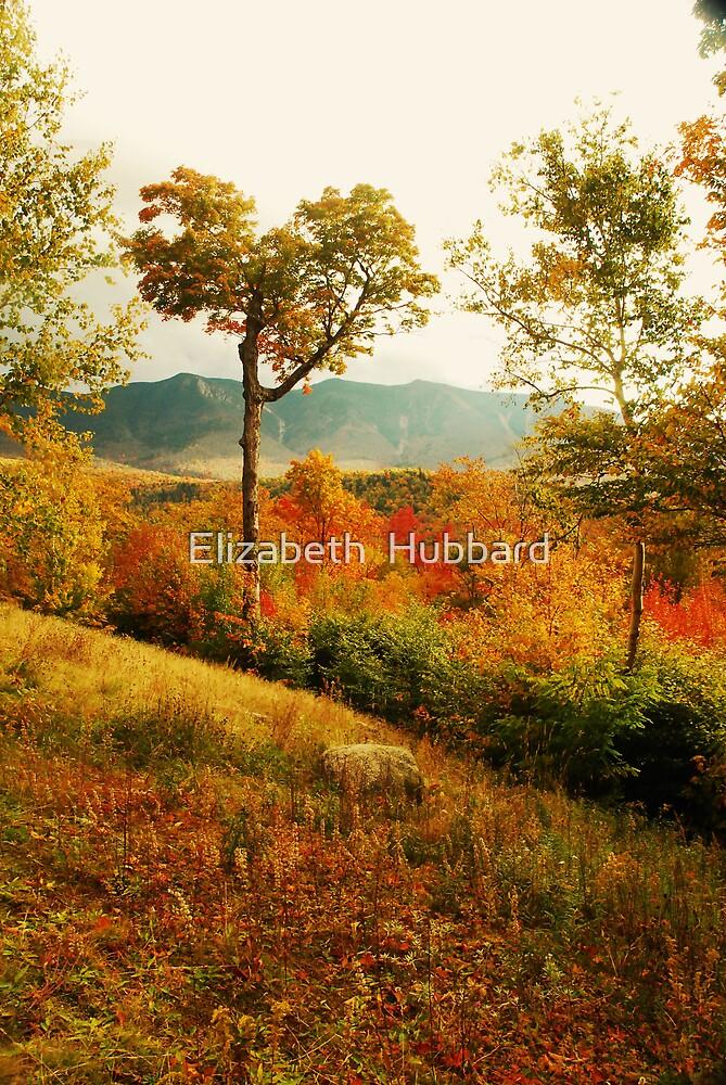 beaut by Elizabeth  Hubbard