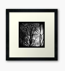 Trees in the Afternoon Sun - TTV Framed Print