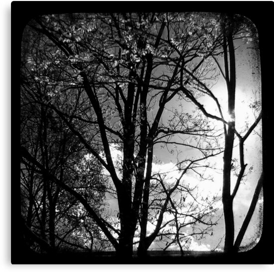 Trees in the Afternoon Sun - TTV by Kitsmumma