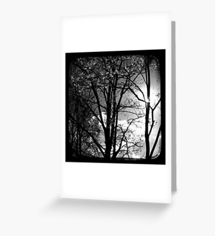 Trees in the Afternoon Sun - TTV Greeting Card