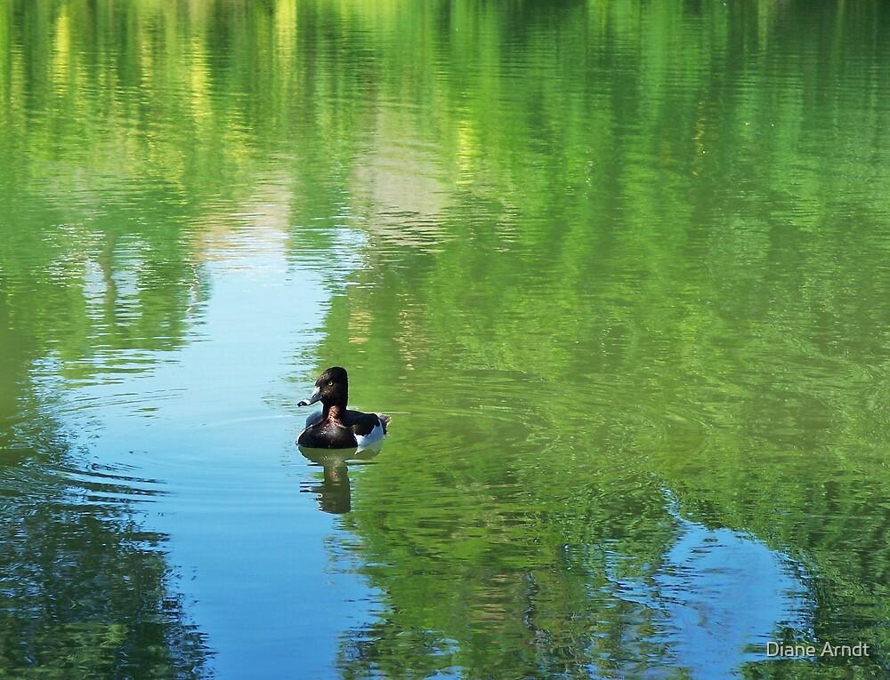 Duckie by Diane Arndt