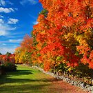 New England Stone Wall  by OntheroadImage