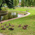 Feeding Time in Sanders Park by StephenRphoto