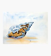 The Glass Shell Photographic Print