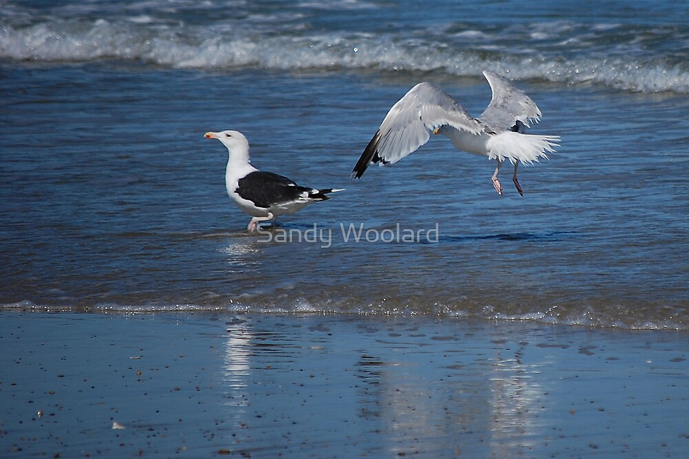Get me if you can! by Sandy Woolard