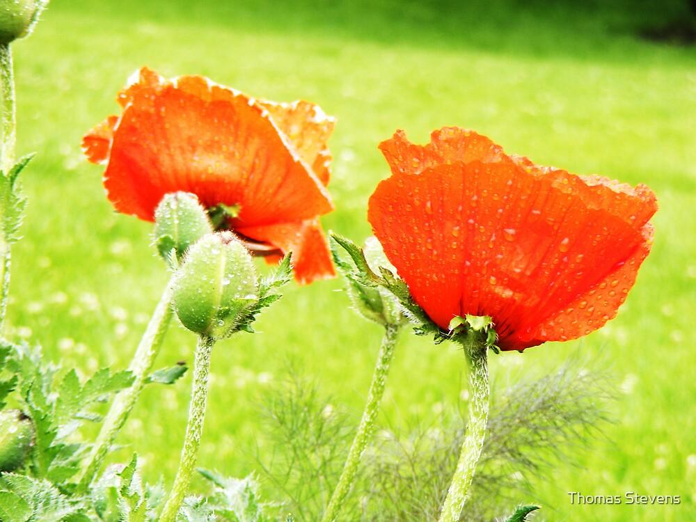 Poppies Will Make Them Sleep by Thomas Stevens