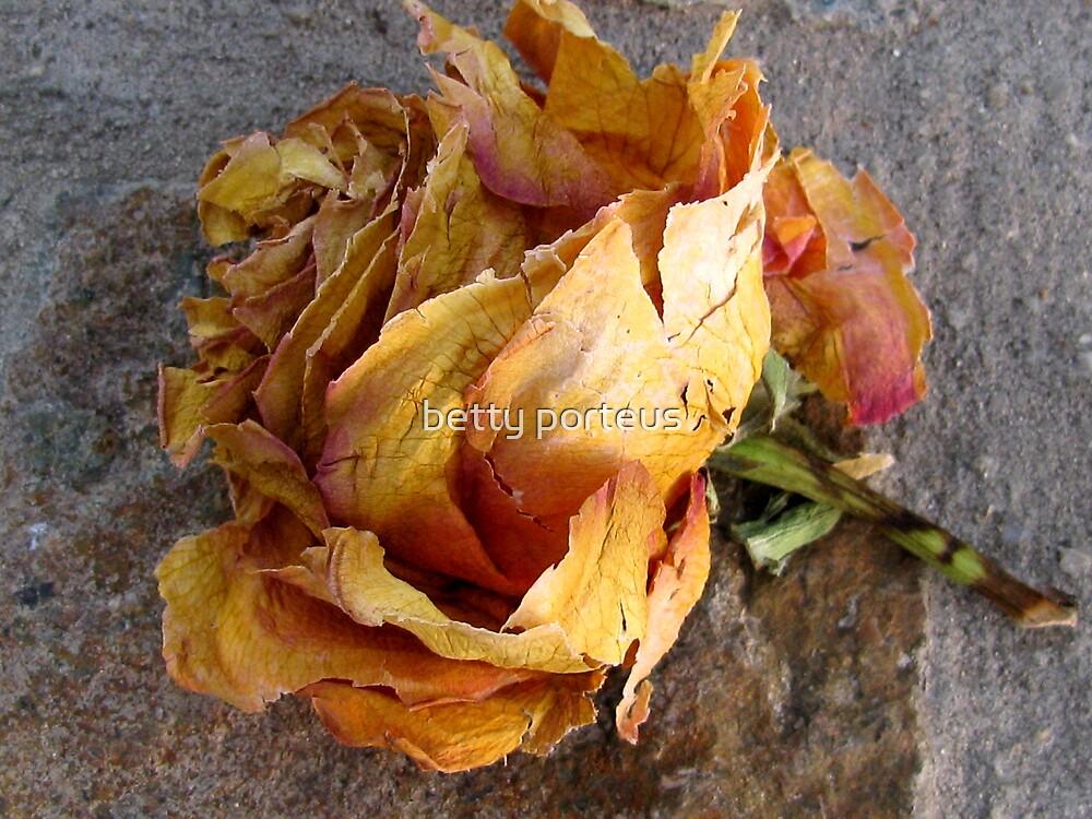 yesterdays rose by betty porteus