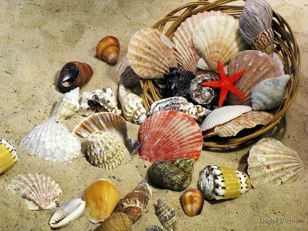 Shell Collection by Detlef Becher