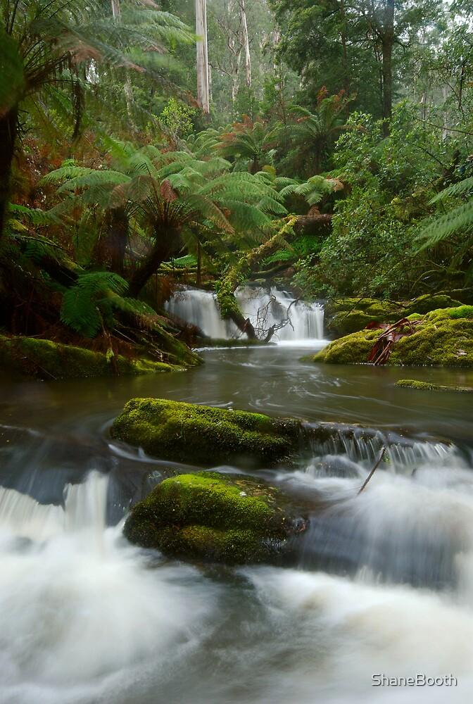 Yannathan Cascades - Great Otways National Park by ShaneBooth