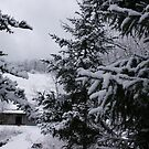 Winter Wonderland over Wolf Creek by Linda Costello Hinchey