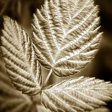 Monochrome Leaf by rollosphotos