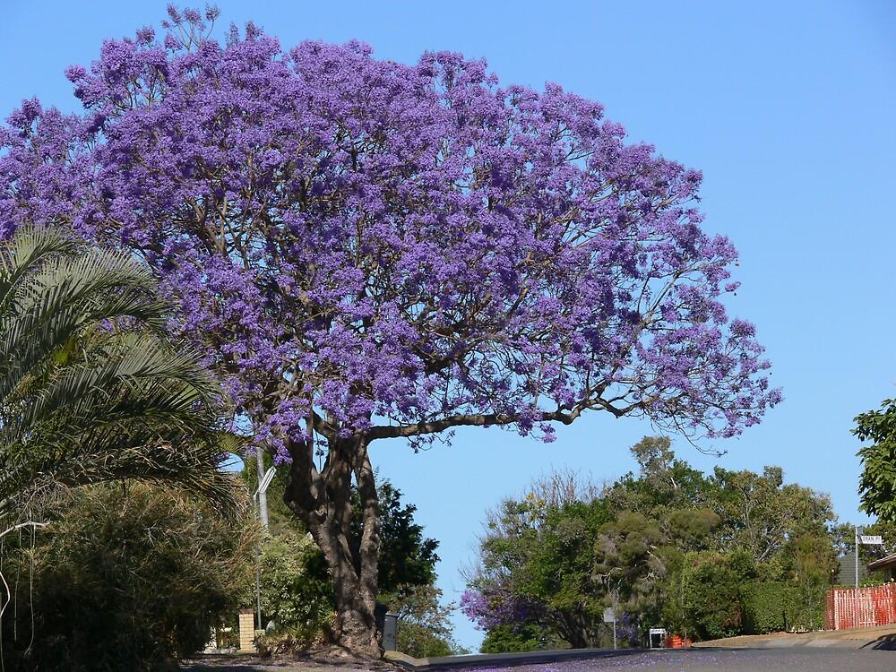 Jacaranda tree by PhotosByG