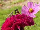 Praying Mantis Dining on a Moth by FrankieCat